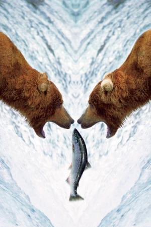 Two Bears For One Fish