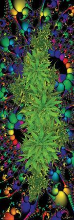 Fractal - Marijuana