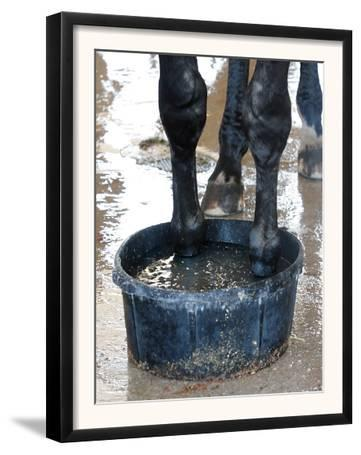 Racing Horse Kinetic Yankee is Cooled off
