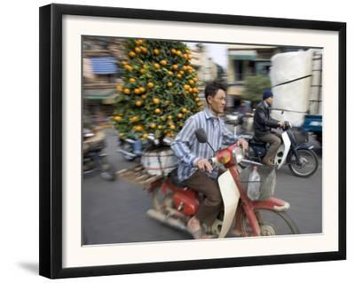 A Vietnamese Vendor Races Down a Street on a Motorbike Carrying a Kumquat Tree for Sale