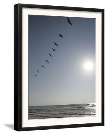Pelicans Pass over Boca Chica, Texas