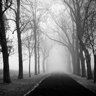 The Foggy Lane