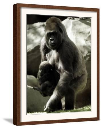 Mother Gorilla Julia