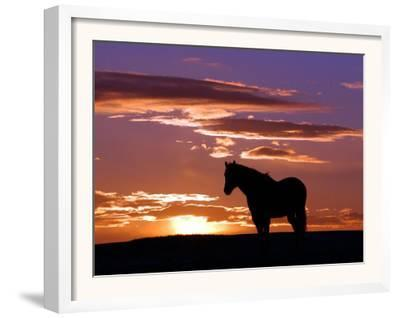 A Wild Horse Lingers at the Edge of the Badlands Near Fryburg, N.D.