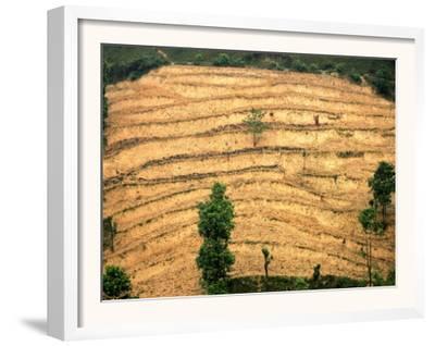 A Nepalese Woman Walks Along Steep Terraced Hills