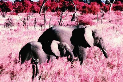Elephants-Standing