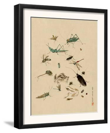 Insects and Toads