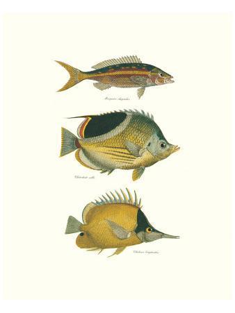 Tropical Fish I