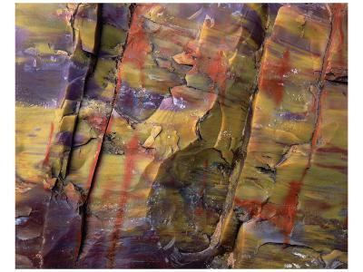 Petrified Wood II