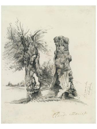 Tree Trunks at La Mare au Clerc