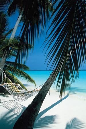 Palm View - Hammock