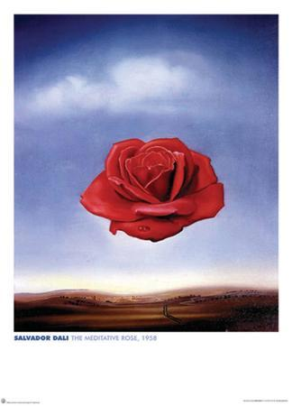 Dali - Meditative Rose