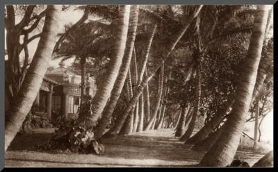 Coconut Lane, Waikiki, Hawaii, 1916