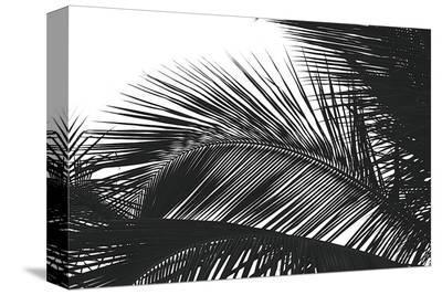 Palms, no. 13