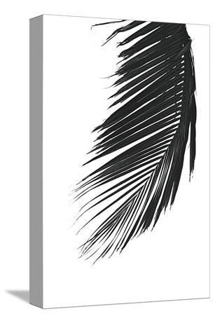 Palms, no. 8