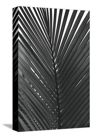 Palms, no. 9