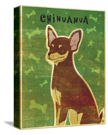 Chihuahua (chocolate and tan)