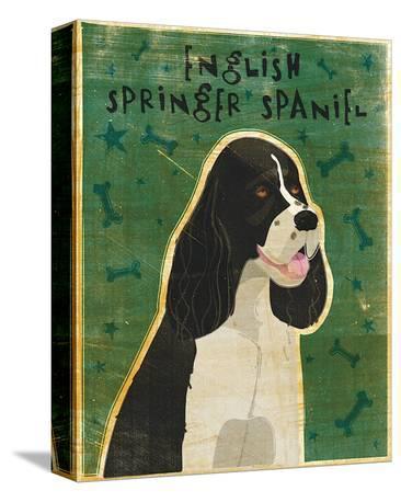 English Springer Spaniel (black and white)