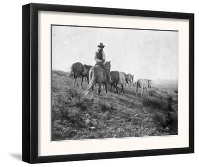 Cowboy on Horseback with Herd of Horses Photograph - Texas