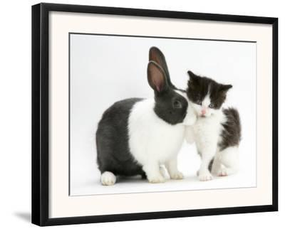 Black-And-White Kitten with Blue Dutch Rabbit