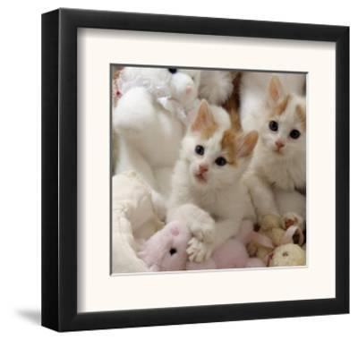Domestic Cat, Two Turkish Van Kittens with Soft Toys in Crib