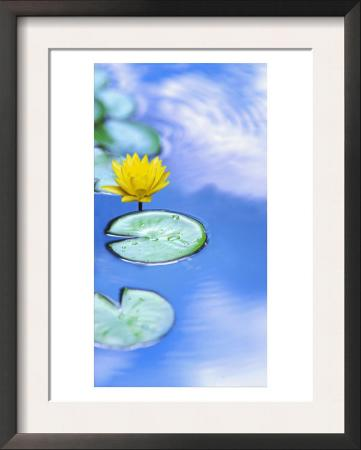 Yellow Flower in Water
