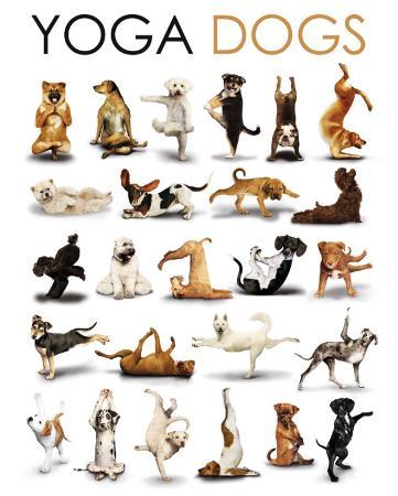 Yoga - Dogs