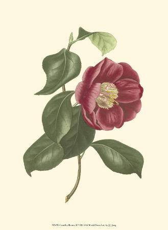 Camellia Blooms II