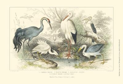 Herons, Egrets & Cranes