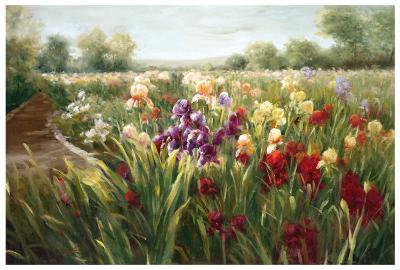 Fields of Iris