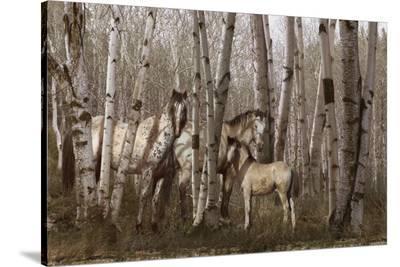 Birchwood Family