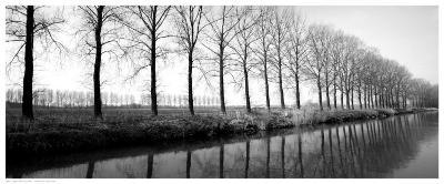 Trees Along the Canal