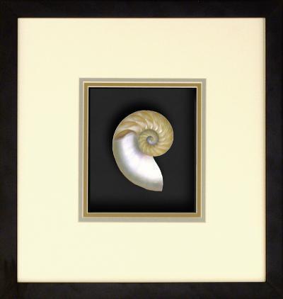 *Exclusive* Natural Nautilus III