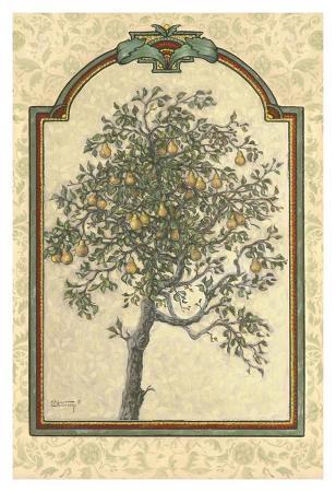 Classical Pear