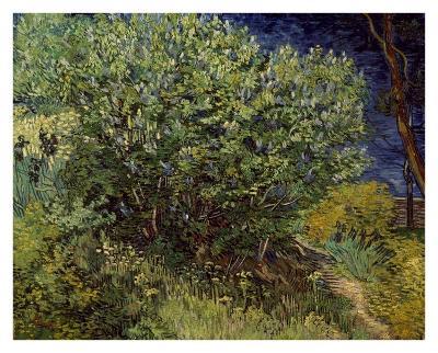 Lilac Bush, 1889