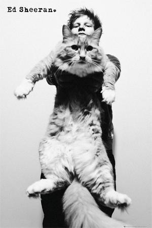 Ed Sheeran-Cat