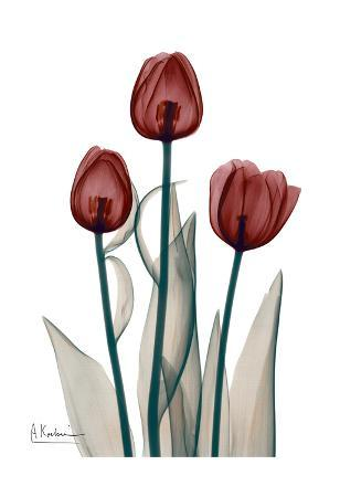 Early Tulips in Red