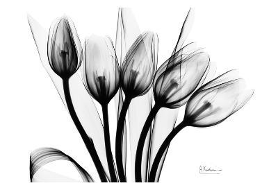Early Tulips N Black and White