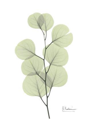 Eucalyptus in Pale Green
