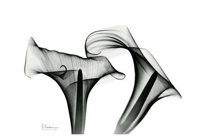Calla Lily Close Up in Black and White