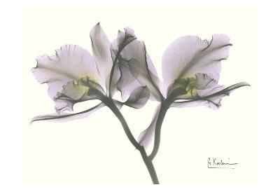 Beautiful Orchid in Purple