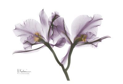 Beautiful Orchid in Purple II