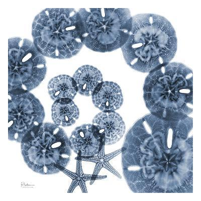 Collage of Sand Dollars and Starfish