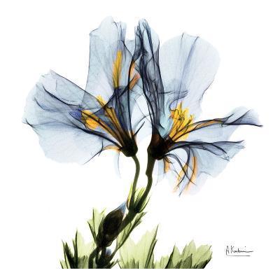 Blue Azalea in Bloom