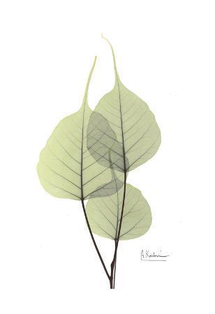 Bo Tree in Pale Green II