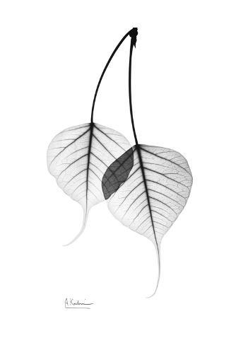 bodhi tree leaves in black and white poster by albert koetsier at allposters com