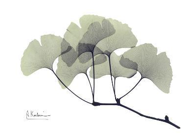 Ginkgo Leaves in Green
