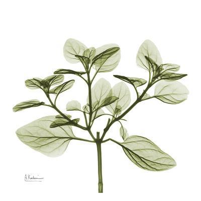 Green Leaves in Bloom II