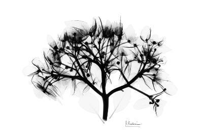 Hydrangea Bouquet in Black and White