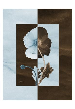 Iceland Poppies on Blue and Brown
